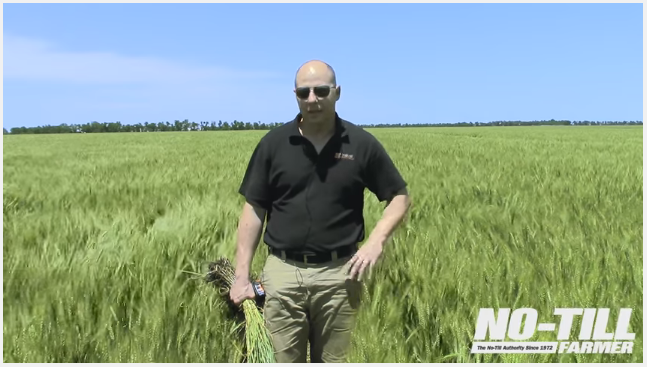No-Till Wheat Yield Champion's Tips on Fertility, Grid Sampling