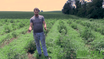 One Farm's Experience No-Tilling CBD Hemp